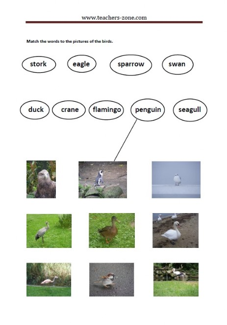 match the birds to their names