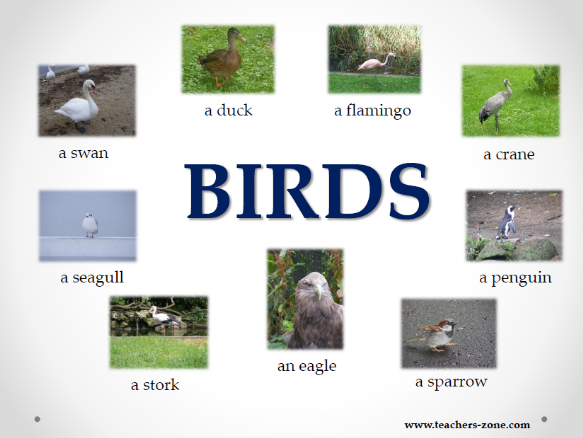 Birds resources