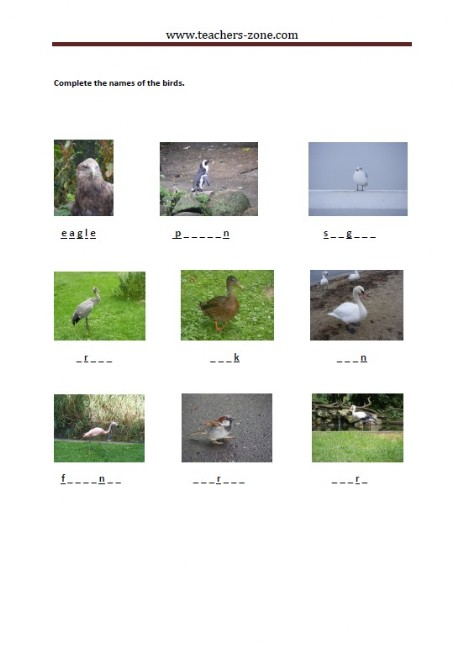 complete the names of the birds