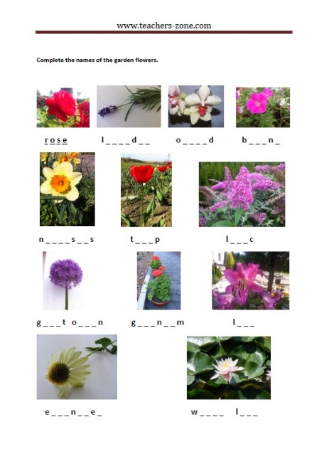 complete teh names of the garden flowers