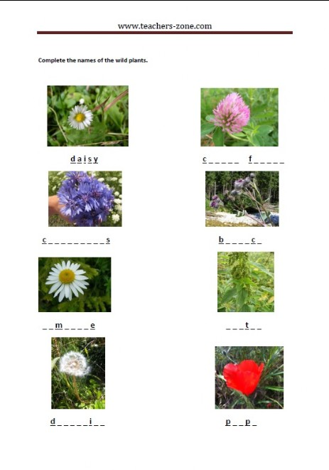 complete the names of the wild plants