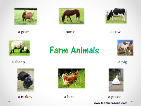 Farm animals resources