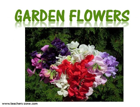 garden flowers vocabulary