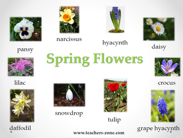 Free poster for sprin flowers vocabulary