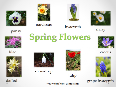 Poster for spring flowers
