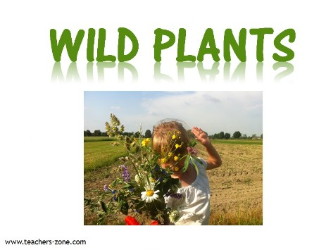 wild plants vocabulary