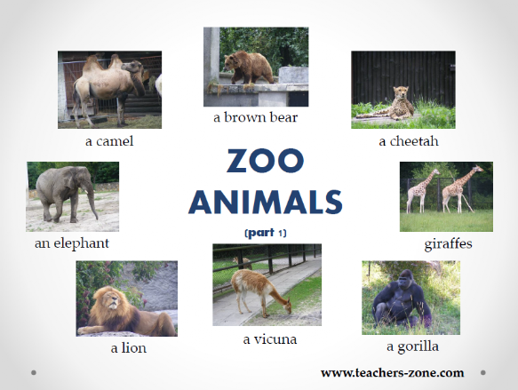 Zoo animals resources